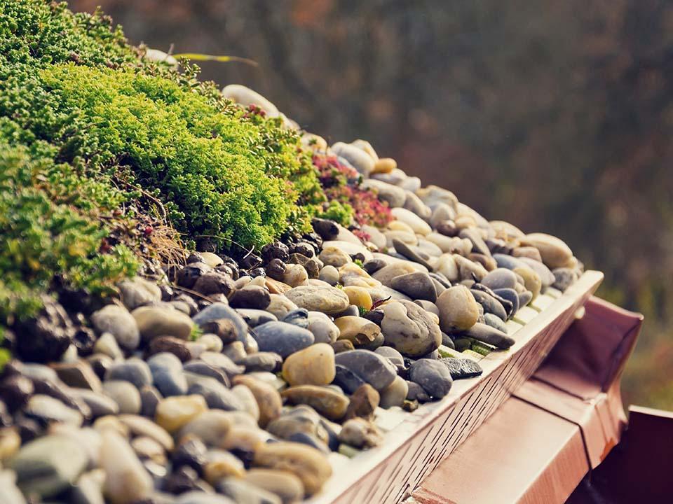 Groen op dak - ecologisch